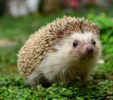 Hurrah for Hedgehogs